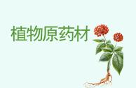 植物原药材